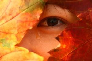 A Tear from Japan